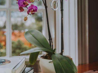 d71e1e48-orchidclara_10000000hs0ql00000201o
